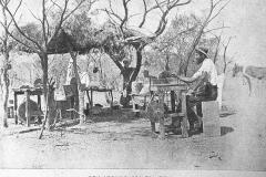 5-Opalton-1902-1